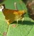 Farfalla 24