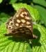 Farfalla 27