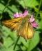 Farfalla 4