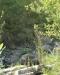 Ambiente del fiume Timeto: scorcio 1