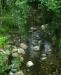 Ambiente del fiume Timeto: scorcio 4
