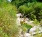Ambiente del fiume Timeto: scorcio 6