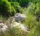 Ambiente del fiume Timeto: scorcio 7