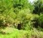 Ambiente del fiume Timeto: scorcio 8