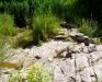 Ambiente del fiume Timeto: scorcio 9